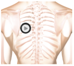 auscultation sound from lesson