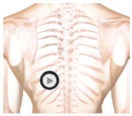 patient torso with stethoscope chestpiece