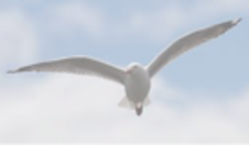 seagull sign