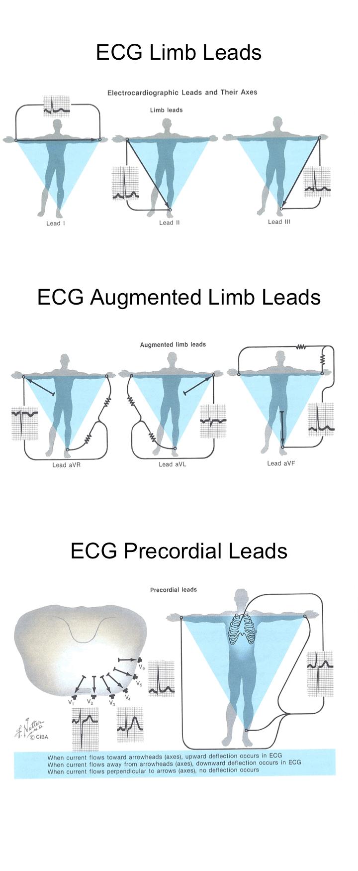ecg limb leads